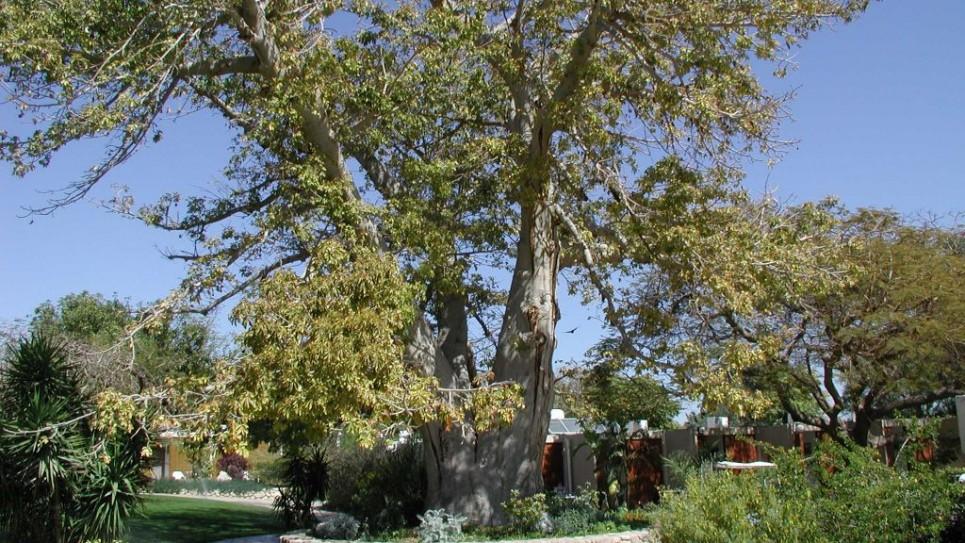 baubob-botanicical-ein-gedi-965x543