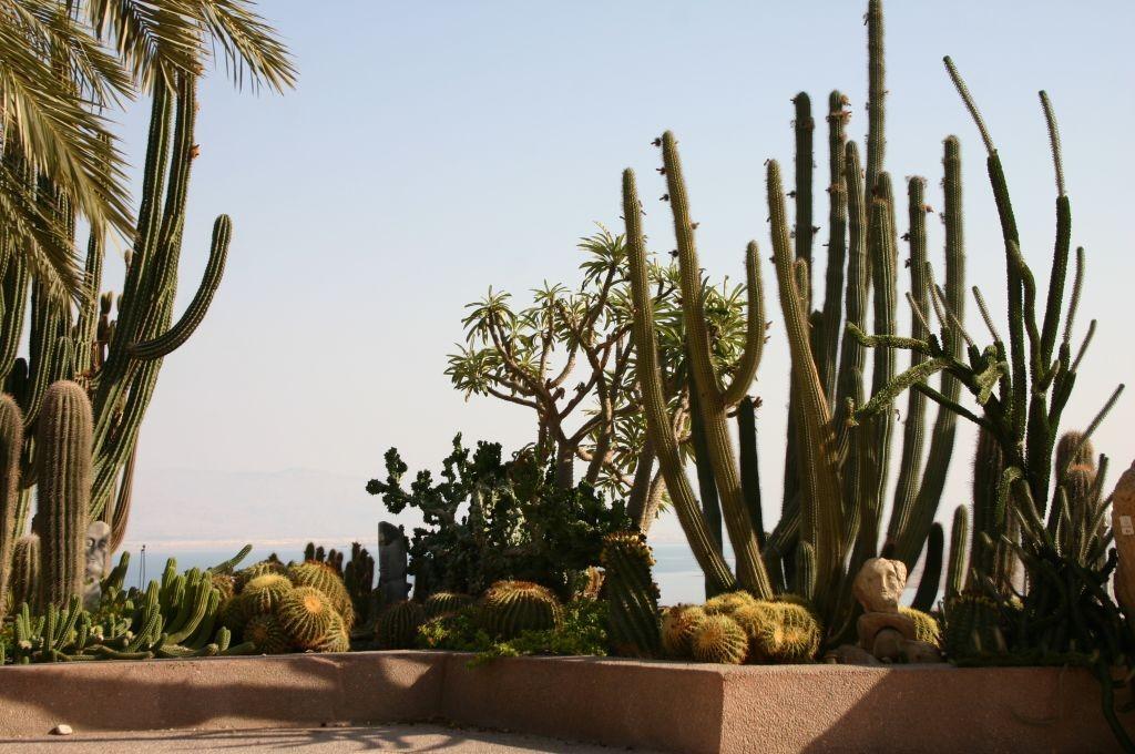 cactus-balcony-botanical-ein-gedi8593