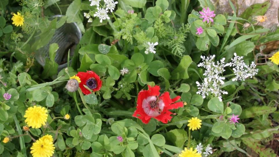 gilboa-3727-flowers-965x543