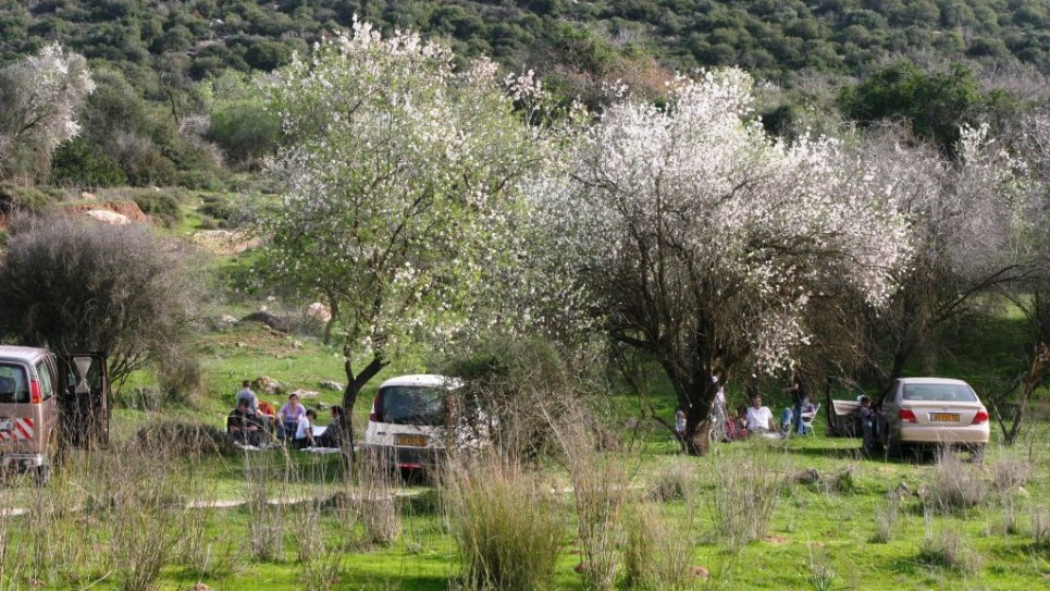 almond-trees-beit-jamal-2-2005-1042-965x543
