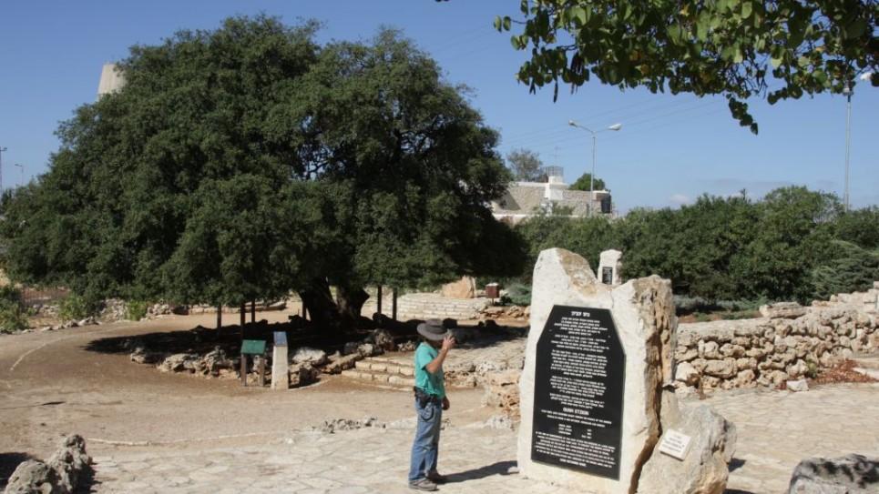 kfar-etzion-2002-lone-oak-gadi-965x543