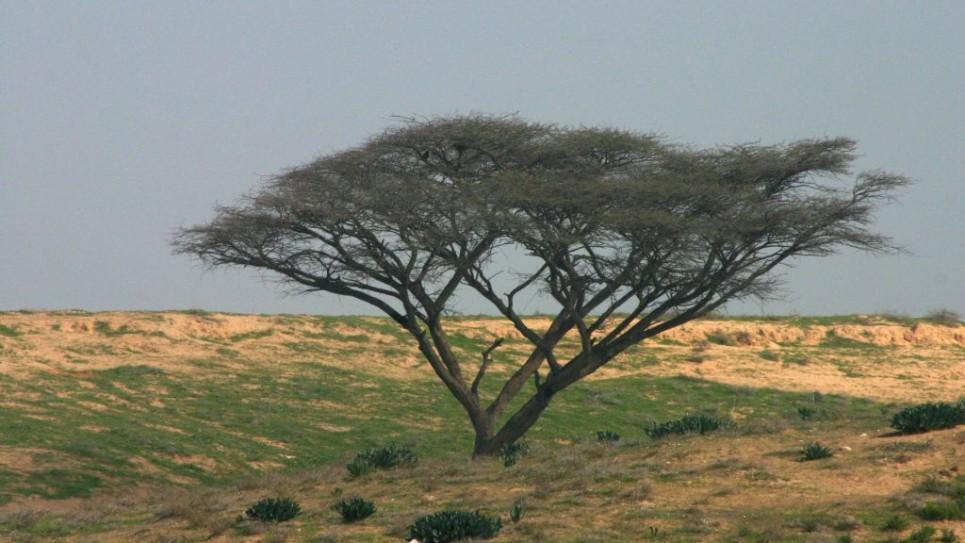 acacia-besor-scenic-d1482-965x543